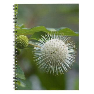 Weiße Buttonbush Wildblume Spiral Notizblock