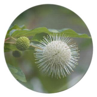 Weiße Buttonbush Wildblume Teller