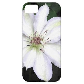 Weiße Clematis-Blume iPhone 5 Schutzhülle