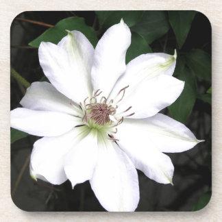 Weiße Clematis-Blume Untersetzer
