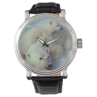 Weiße Eisbär-Familie Uhren