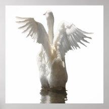 Weiße Enten-Flattern-Flügel auf Wasser-Vektor