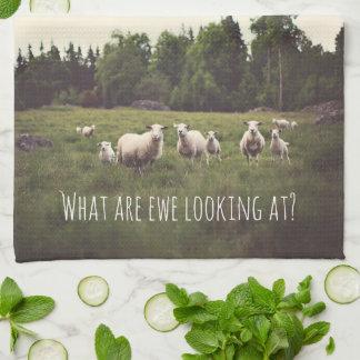 Weiße flaumige weiße Schafe u. Lämmer im Geschirrtuch