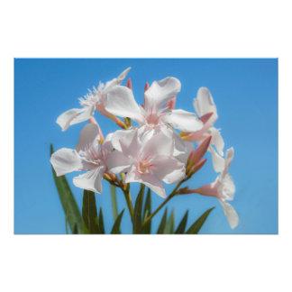 Weiße Flora Fotodruck