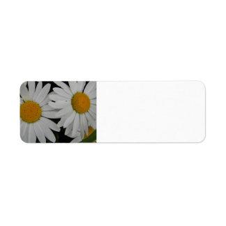 Weiße Gänseblümchen-in voller Blüte kundengerechte