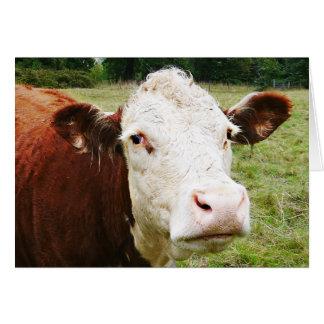Weiße gegenübergestellte Rindfleisch-Kuh Karte