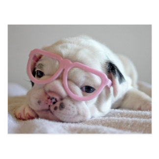 Weiße Gläser Junges der französischen Bulldogge, Postkarte