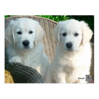 Weiße golden retriever-Hunde, die in der Faser Postkarte