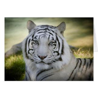 Weiße Gruß-Karte des Tiger-(v2) personifizieren Karte