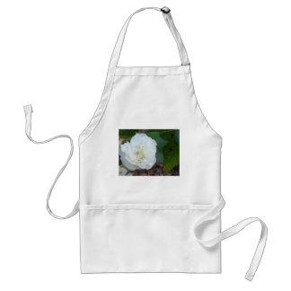 weiße Hibiskus mutabilis Blume Schürze
