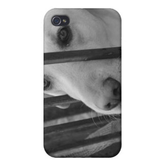 Weiße HundiPhone Schablone Etui Fürs iPhone 4