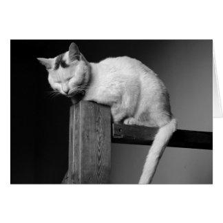 Weiße Katze auf Schiene Karte