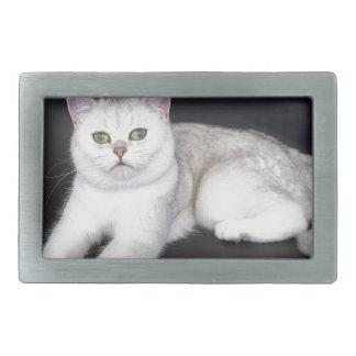 Weiße Katze, die auf abgeschiedenem schwarzem Rechteckige Gürtelschnalle