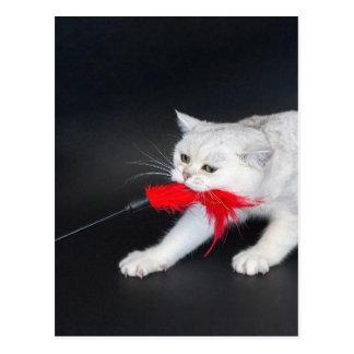 Weiße Katze, die rotes Spielzeug ziehend spielt Postkarte