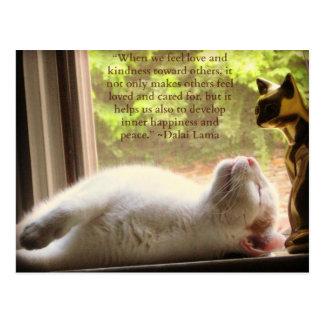Weiße Katze u. Dalai Lama-Güte-Zitat Postkarte