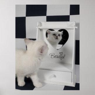 Weiße Katze vorm Spiegel Poster
