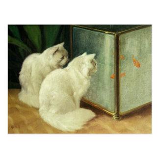 Weiße Katzen, die Goldfisch aufpassen Postkarte