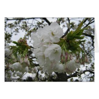 Weiße Kirschblüte für den Tag der Mutter Karte