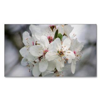 Weiße Kirschblüte Visitenkartenmagnet
