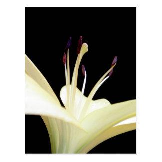 Weiße Lilien-Blumen-Lilien-Blumen-Foto Postkarte