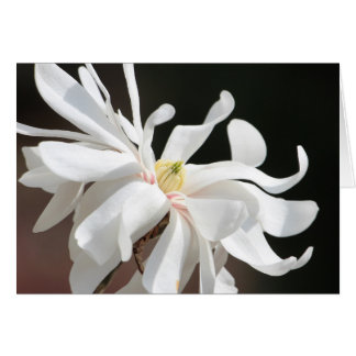 Weiße Magnolie Karte