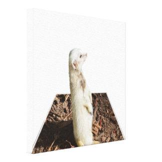 Weiße Meerkat Maßkunst, Leinwanddruck