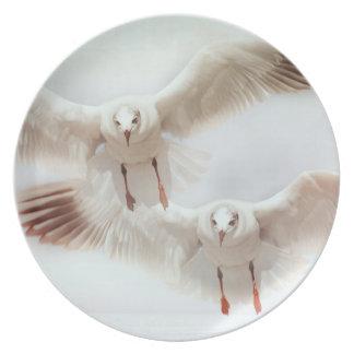 Weiße Möven im Flug Teller
