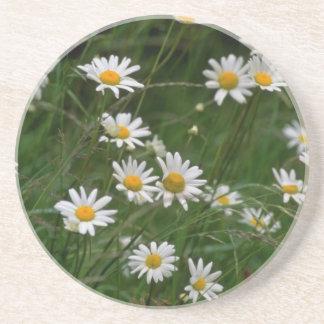 weiße Ochsenaugegänseblümchen-Blumen Getränkeuntersetzer