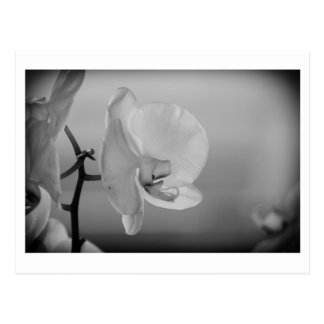 Weiße Orchidee - Postkarte