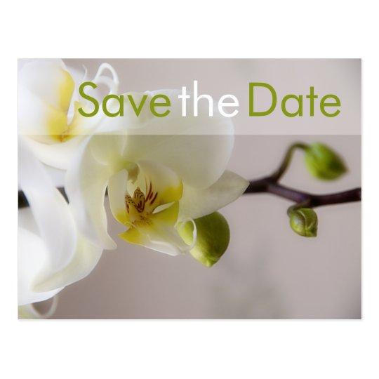 Weiße Orchidee • Save-the-Date-Postkarte Postkarte