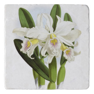 Weiße Orchidee Trivet Töpfeuntersetzer