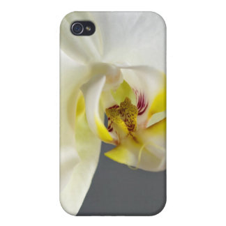 Weiße Orchideen-Blume iPhone 4 Cover