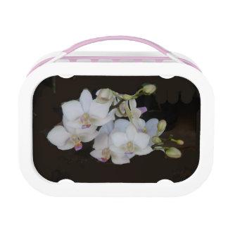 Weiße Orchideen Brotdose