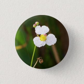Weiße Orchideen-Geschenke und Kleid Runder Button 3,2 Cm