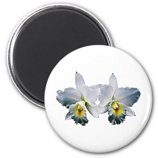 Weiße Orchideen-hawaiisches Hochzeits-Lied Magnete