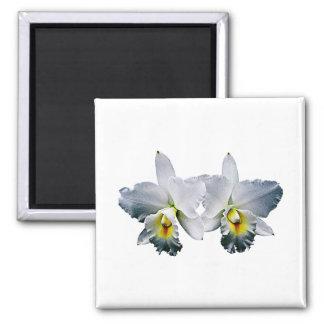 Weiße Orchideen-hawaiisches Hochzeits-Lied Kühlschrankmagnet