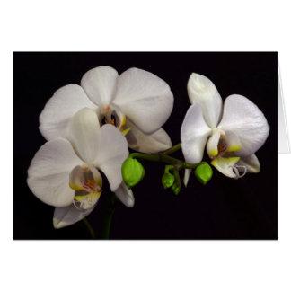 Weiße Orchideen Karte