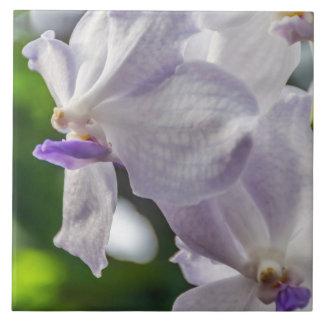 Weiße Orchideen-Keramik-Fotofliese Keramikfliese
