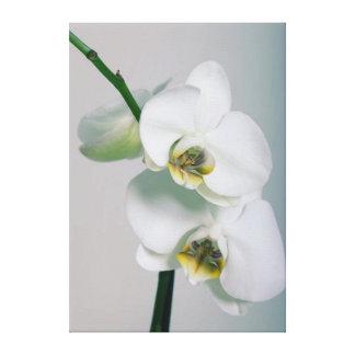 Weiße Orchideen Leinwandbild Leinwanddruck