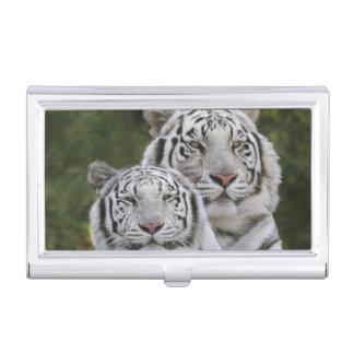 Weiße Phase, bengalischer Tiger, der Tigris Visitenkarten Dose