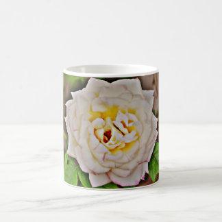 Weiße Rose in der Chrom-Kaffeetasse/Tasse Kaffeetasse