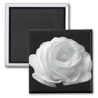 Weiße Rose Quadratischer Magnet