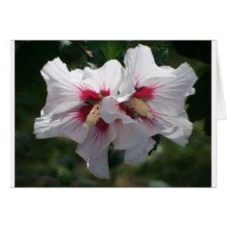 Weiße Rose von Sharon Karte