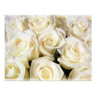 Weiße Rosen-Eleganz Postkarte