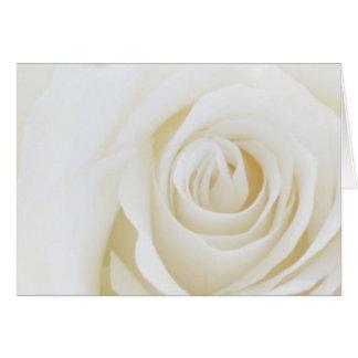 Weiße Rosen-leere Karte