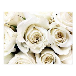 Weiße Rosen-Postkarte Postkarten