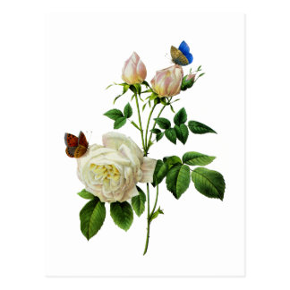 Weiße Rosen und Schmetterlinge durch Redoute Postkarte