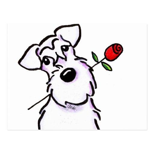 Weiße Schnauzer-Schatz-Rose Postkarten
