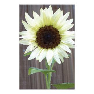 Weiße Sonnenblume gegen einen verwitterten Zaun Briefpapier