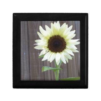 Weiße Sonnenblume gegen einen verwitterten Zaun Erinnerungskiste